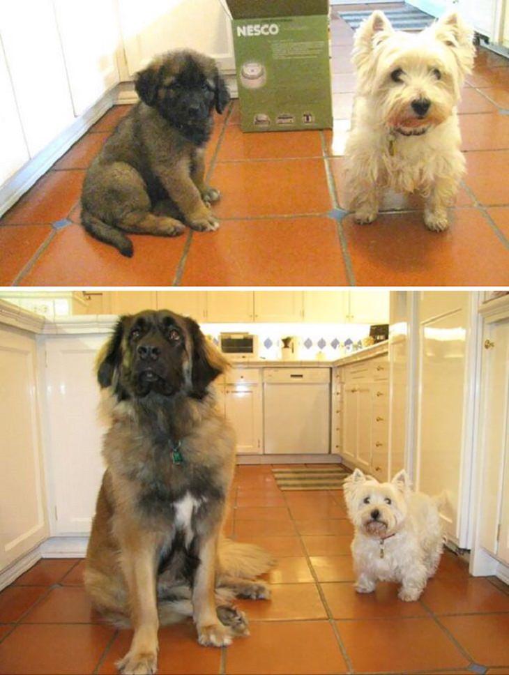 שני כלבים במטבח