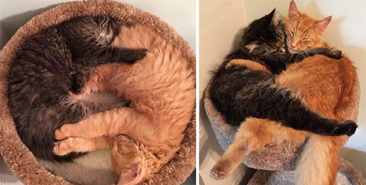 חתולים במיטה