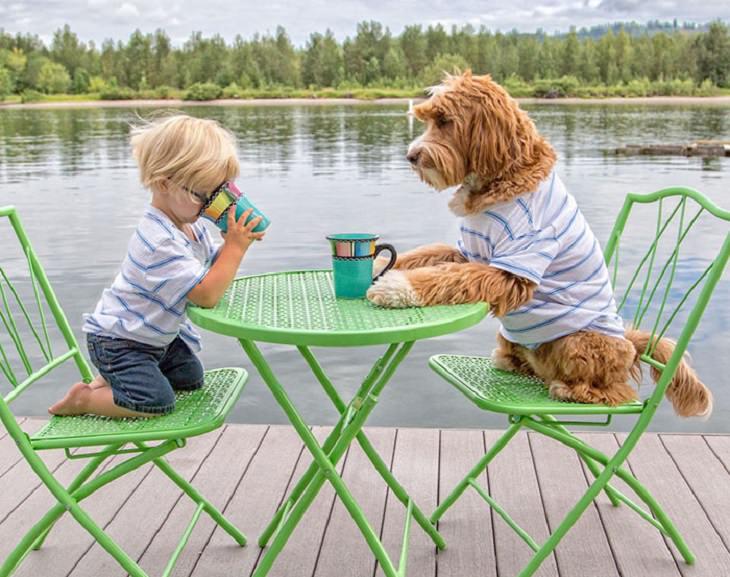 כלב יושב על כיסא מול שולחן וילד יושב מולו