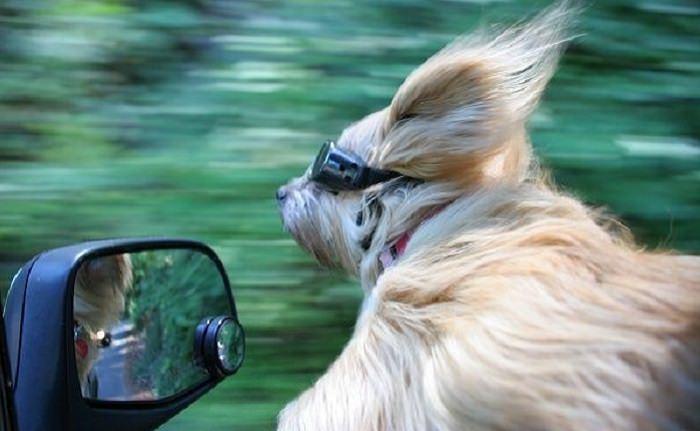 חוויות שרק בעלי כלבים יבינו