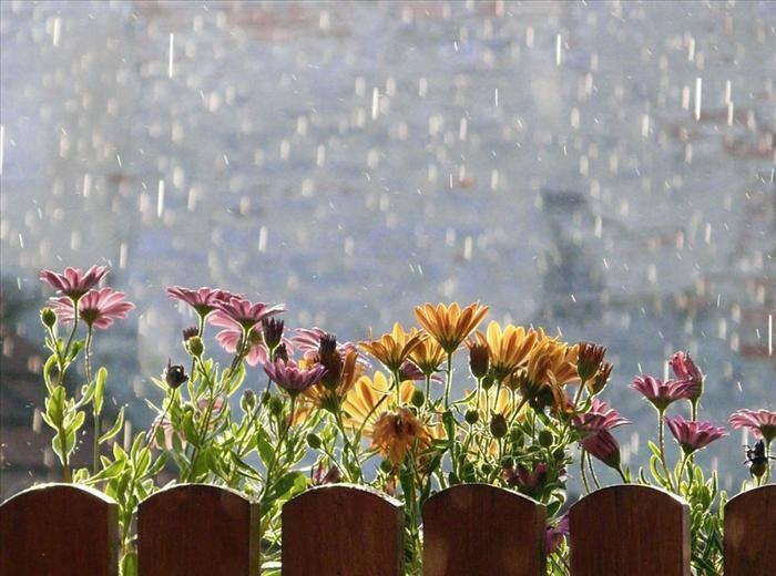 אחרי הגשם