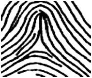 מה האישיות שלך על פי טביעת האצבע: קשת גבוהה