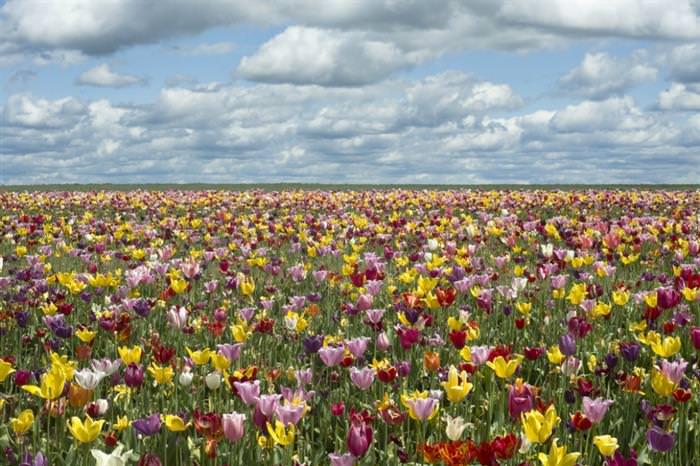 מקומות שנעשים יפים יותר באביב
