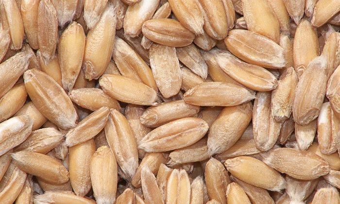 יתרונות בריאותיים של כוסמין: גרגירי כוסמין