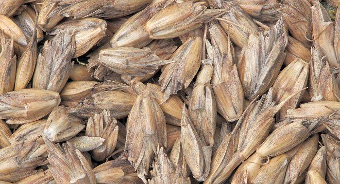 יתרונות בריאותיים של כוסמין: כוסמין