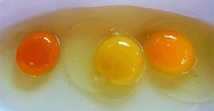 צבע של ביצה בריאה