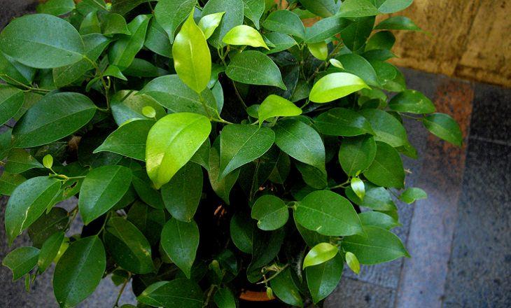 צמחים שנוח לגדל בבית