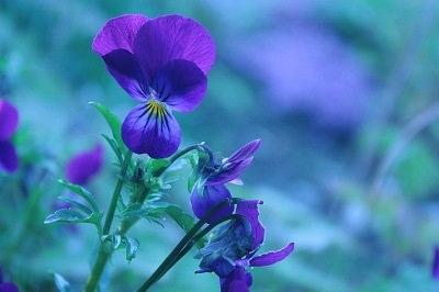 הפרח שתבחר יגלה פרטים על אישיותך