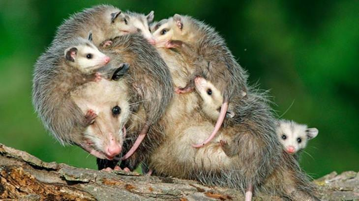 אמהות בממלכת הטבע