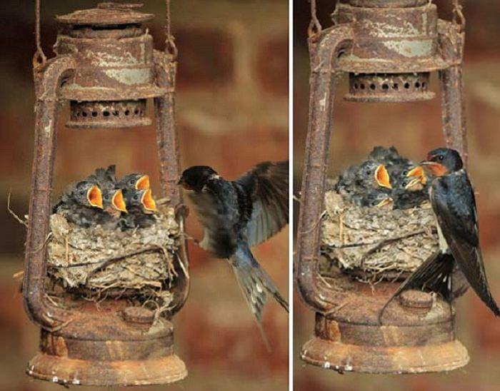 יצירת קני ציפורים