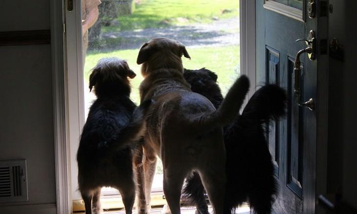 חכמת הכלבים