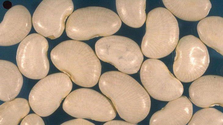יתרונות בריאותיים של סוגי שעועית שונים: שעועית לימה