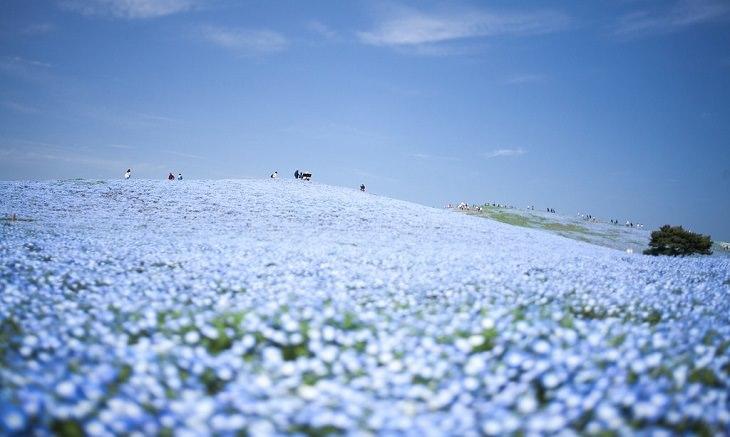 המקומות המדהימים ביותר ביפן: פארק היטאצ'י סיסייד
