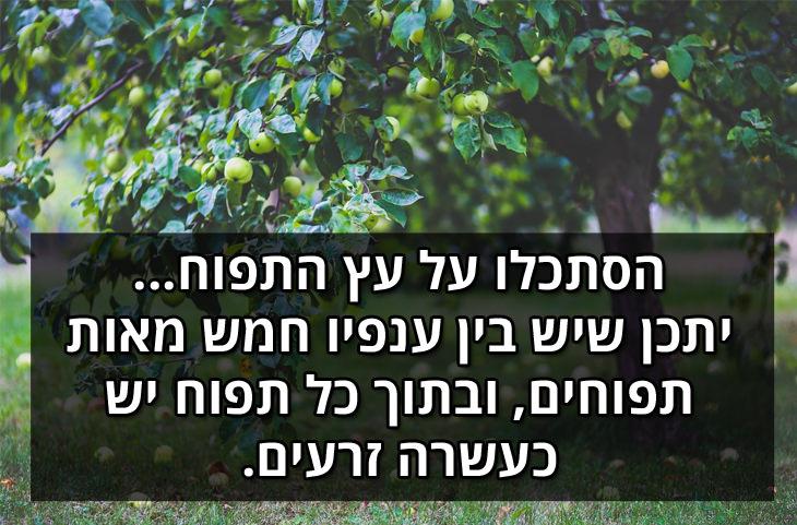 הסתכלו על עץ התפוח... ייתכן שיש בין ענפיו 500 תפוחים ובתוך כל תפוח יש כעשרה זרעים.