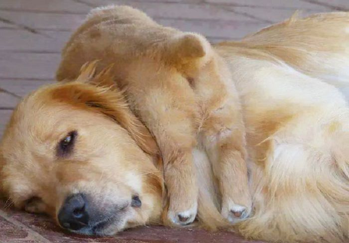 בעלי חיים מציגים: כך זה להיות הורים