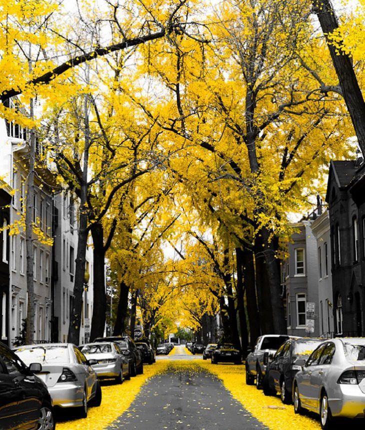 שבילים ורחובות צבעוניים ברחבי העולם