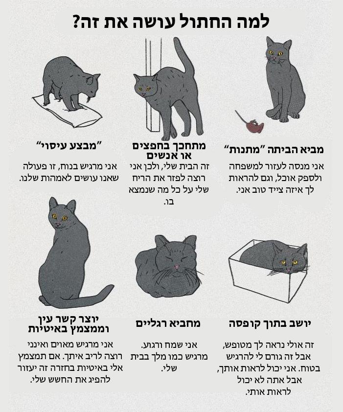 מדריך לשפת הגוף של החתול