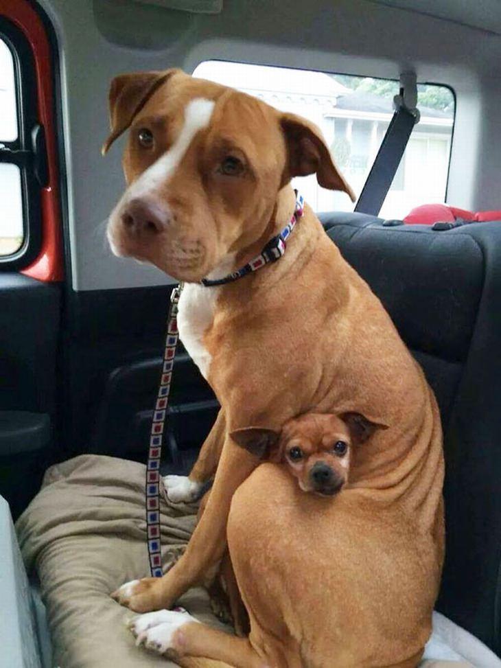החברים הכי טובים - גרסת הכלבים