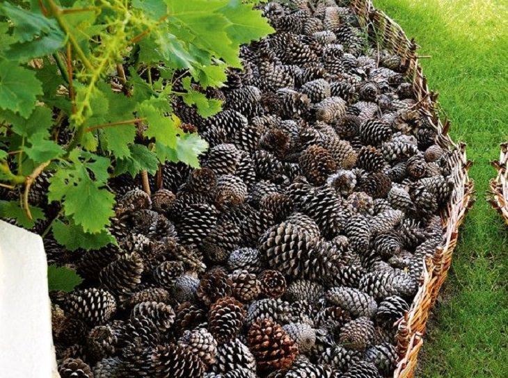 עיצובים לגינה: אצטרובלים בתפזורת סביב צמח