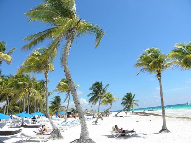 חוף טרופי עם עצי דקל שנוטים לצד