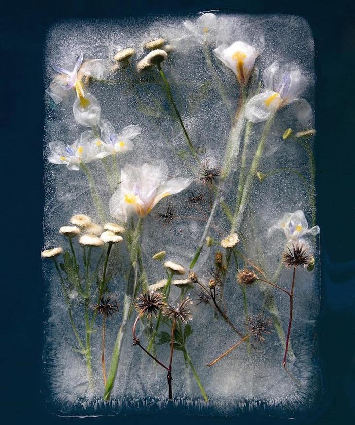 פרחים בעלי עלי כותרת לבנים בבלוק של קרח