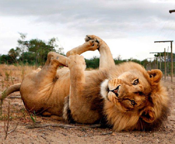 חיות מצחיקות עושות ספורט