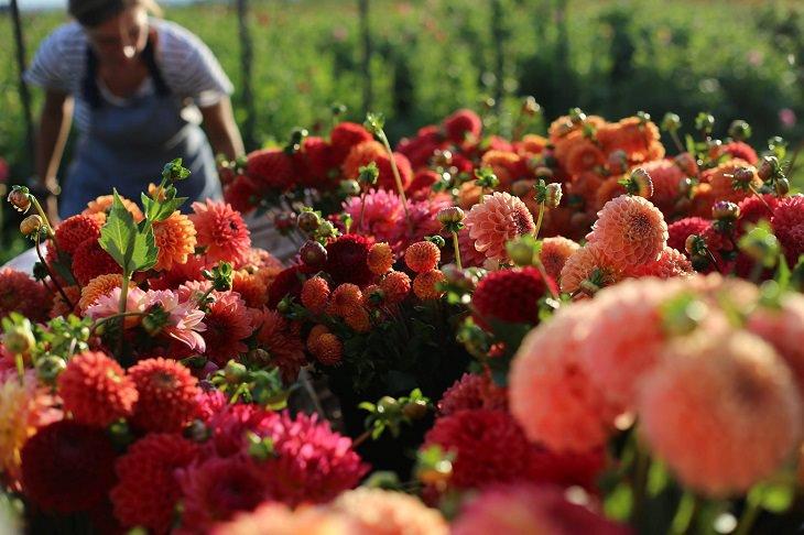 תמונה של ארין מבעד לפרחים