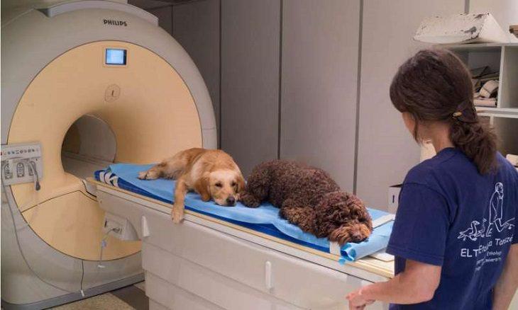 כלבים במכונת הדמייה