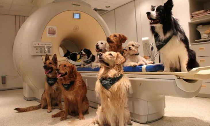 כלבים משתתפים במחקר