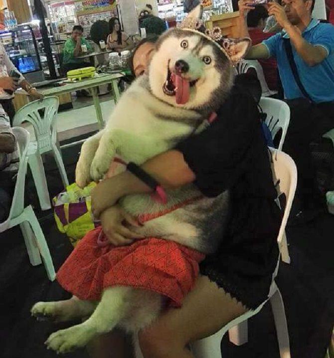 אישה מחבקת כלבה שמסתכלת למצלמה עם הלשון בחוץ