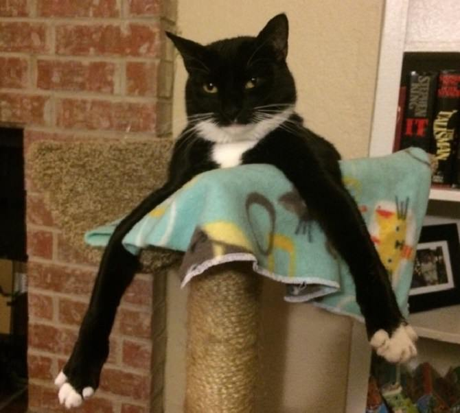 חתול עם שתי רגליים מתוחות קדימה ופלג הגוף התחתון מוסתר