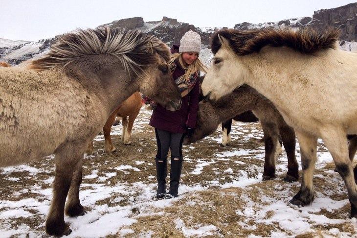 אישה צעירה מלטפת סוסי בר