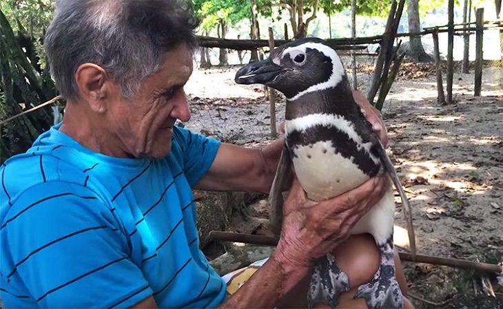 הפינגווין דינדים