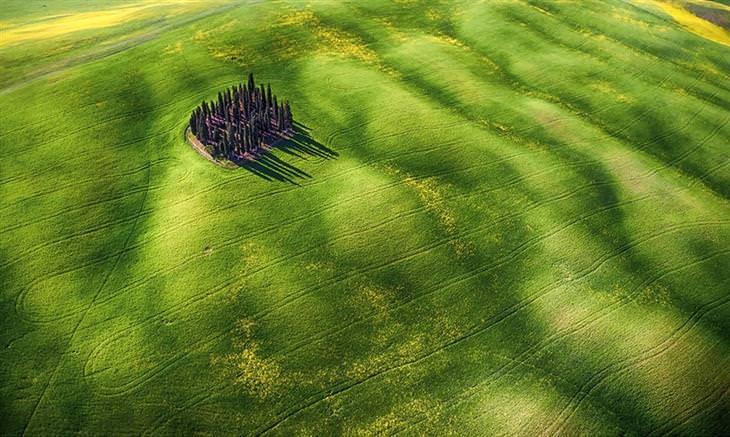 שדה ירוק עם עצים בתוכו