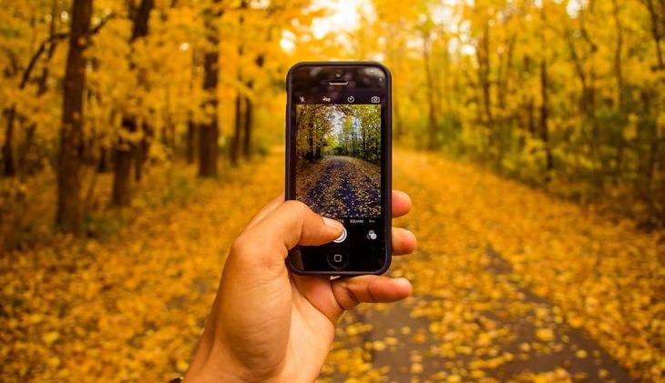 יד אוחזת בטלפון ומצלמת נוף סתווי