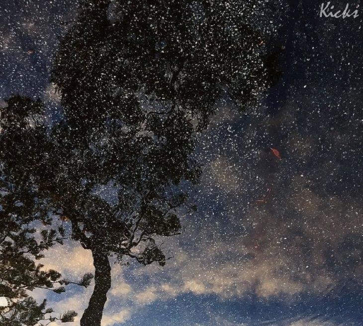 עץ משתקף באגם ועליו מפוזרות נקודות רבות של כוכבים