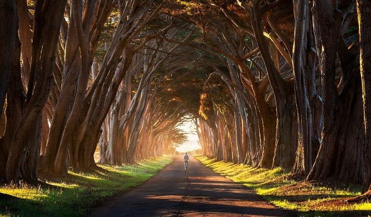 מנהרה העשויה כולה מעצים המסוככים על הולכי הרגל עם ענפיהם