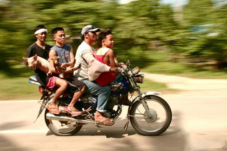 4 אנשים על אופנוע עם חזיר וגדי
