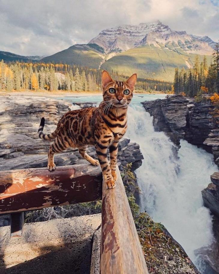 חתולה שטיילה בעולם: סוקי החתולה עומדת ליד מפל