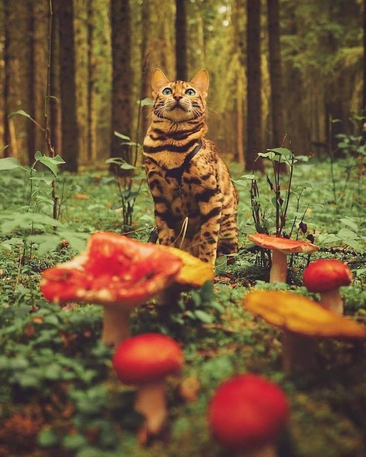 חתולה שטיילה בעולם: סוקי החתולה עומדת ביער
