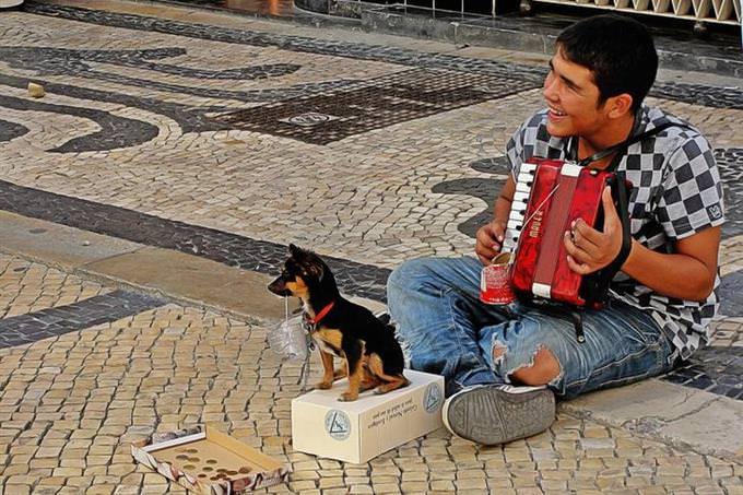 בחן את עצמך - כסף ומצב כלכלי: נגן רחוב עם כלב קטן