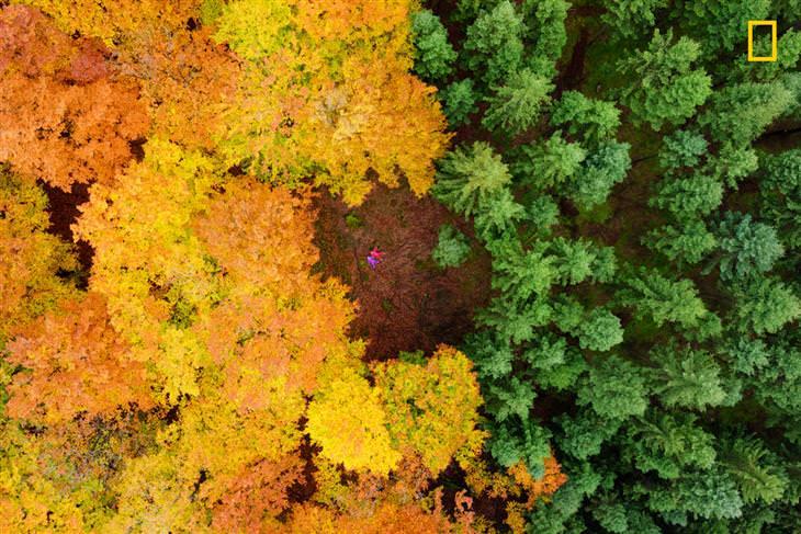 תחרות צילומי טבע של הנשיונל ג'יאוגרפיק: אתנחתא בקרחת יער של עצי אשוח ואשור