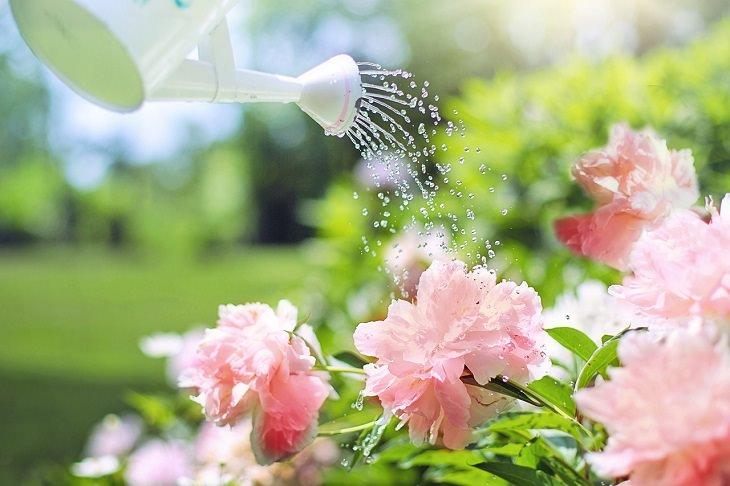 דברים שגורמים לצמחים שלכם לגווע: השקיית צמח