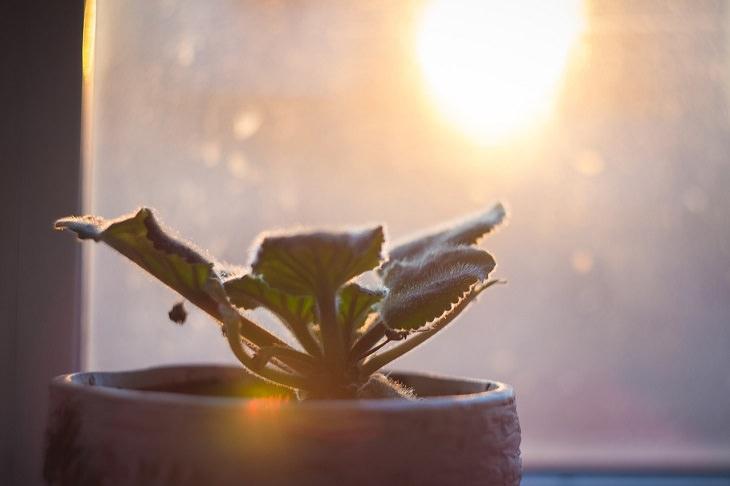 דברים שגורמים לצמחים שלכם לגווע: עציץ לצד חלון מול קרני השמש