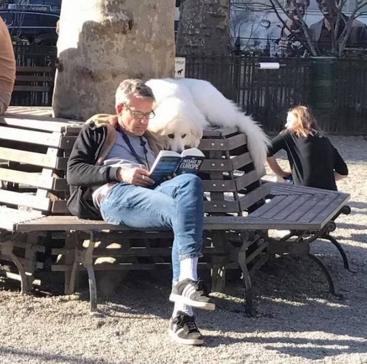 חיות מחמד שלא מוכנות לעזוב את הבעלים שלהן: כלב יושב מעל הבעלים שלו שקורא ספר בפארק