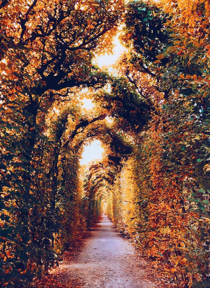 סתיו ברחבי העולם: וינה - שדרת עצים עם עלים בגוונים שונים