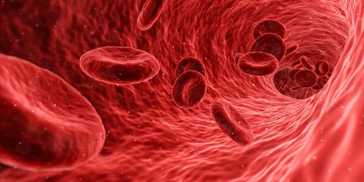 יתרונותיו הבריאותיים של הצנון: איור של דם זורם במחזור הדם