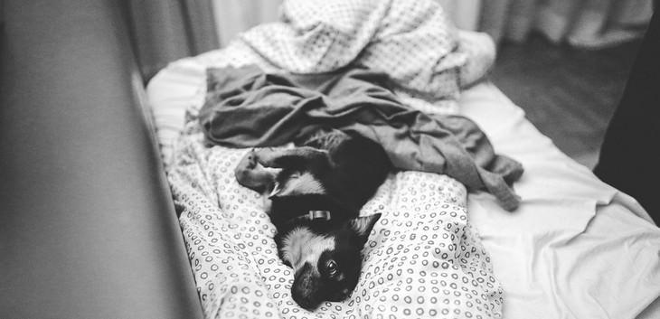 סימנים לכך שהכלב שלכם אוהב אתכם: כלב על מיטה