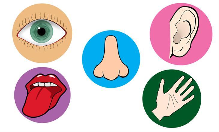 איך לשמור על חמשת החושים: איורים של חמשת החושים