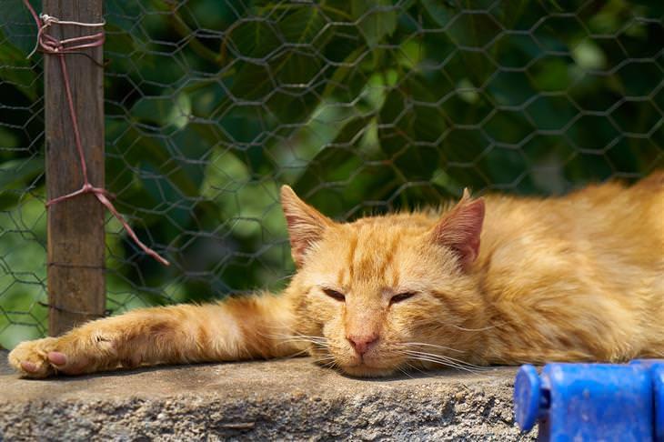 סימני אזהרה לסרטן אצל חתולים: חתול ישן